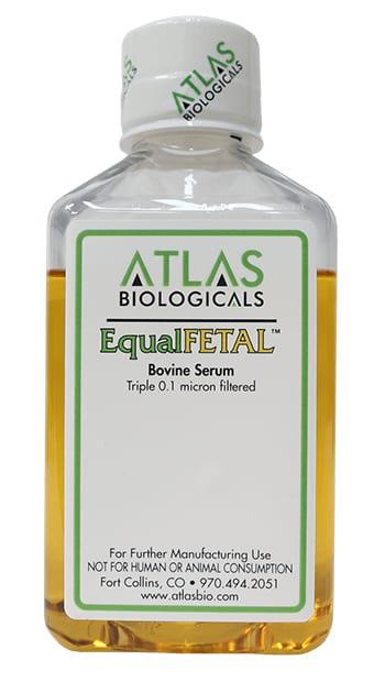 EqualFetal